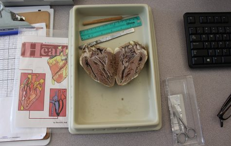 Biomed Students Take a Look Into The Heart