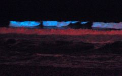Bio-luminescent Beaches: Red Tide in San Diego