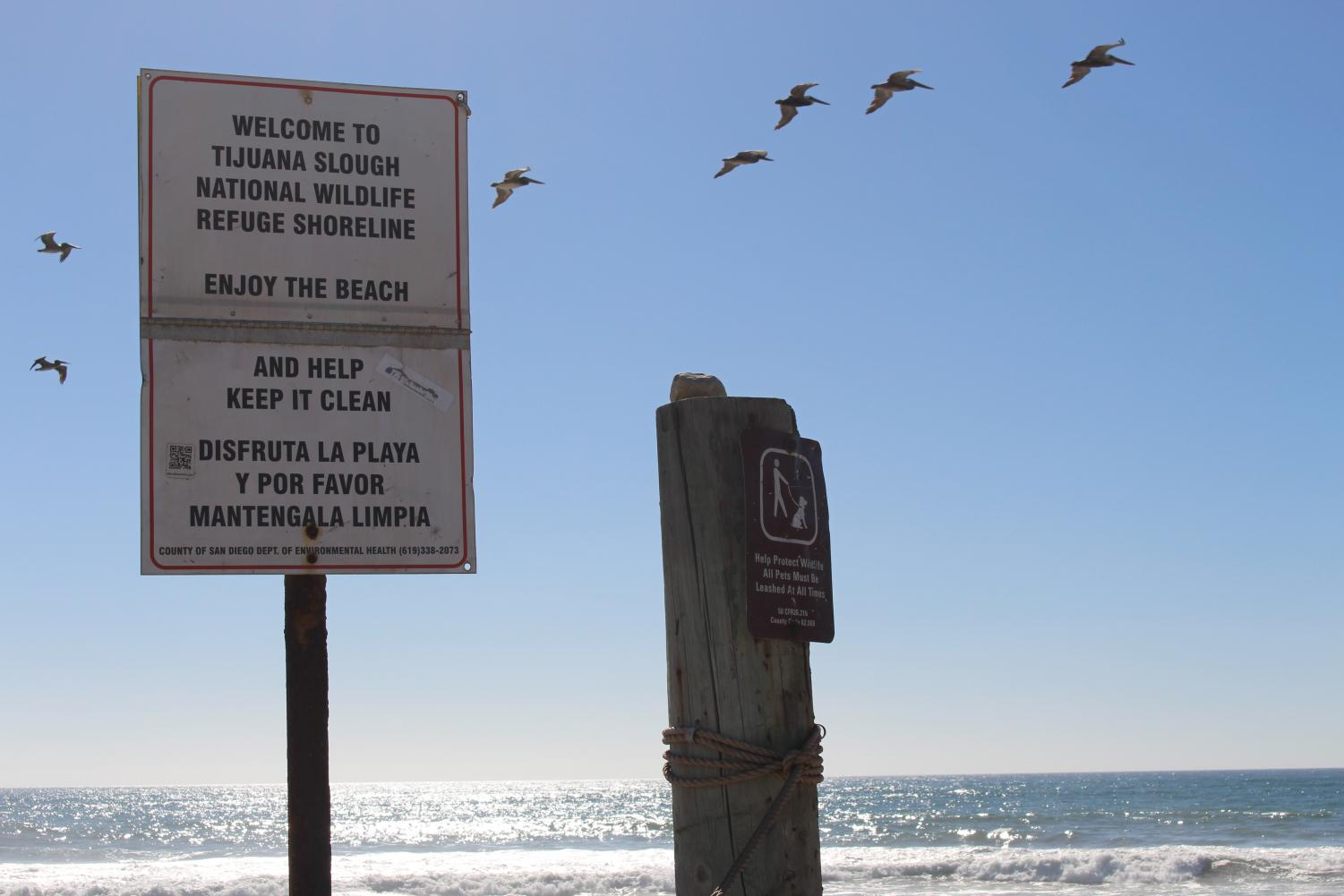 Signs encourage beachgoers to ironically keep the beaches clean and to protect the wildlife it holds. There was no sight of anyone on the beach for a good distance.