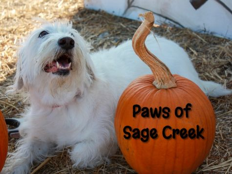 Paws of Sage Creek