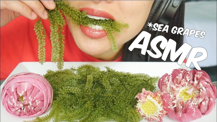 Mukbang Youtuber, SAS-ASMR, eats sea grapes which is a type of caviar. This video on Youtube collected a total of over 19 million views.