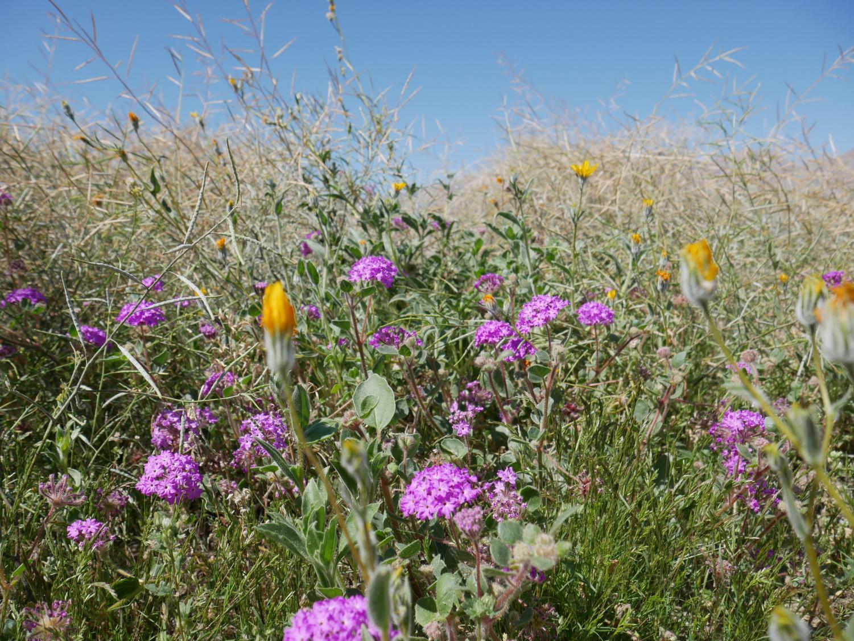 The+Desert+Still+Blooms