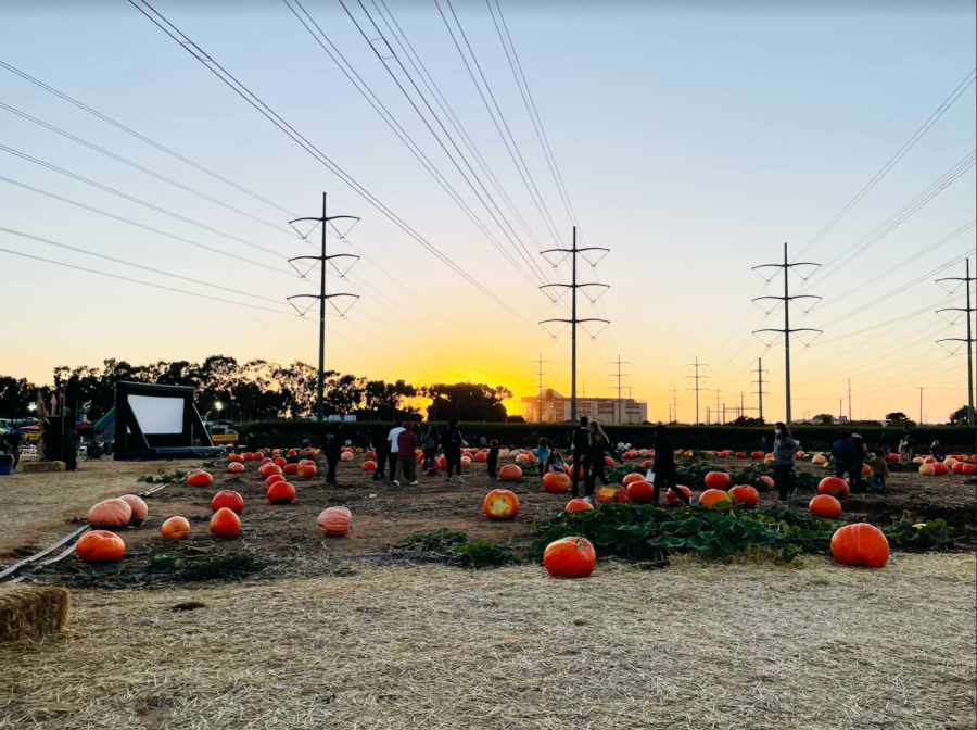 Families+roam+around+at+the+Carlsbad+Strawberry+Company%E2%80%99s+annual+pumpkin+patch+in+search+of+the+perfect+pumpkin.+Additionally%2C+families+can+participate+in+fun+activities%2C+such+as+a+tractor+ride%2C+apple+cannons+and+a+corn+maze.